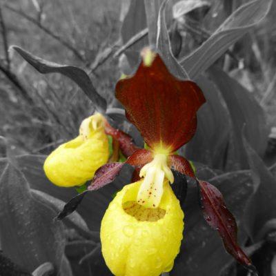 Flora que nos regala color en estos parajes. Posiblemente la encontraremos en el Portalet.
