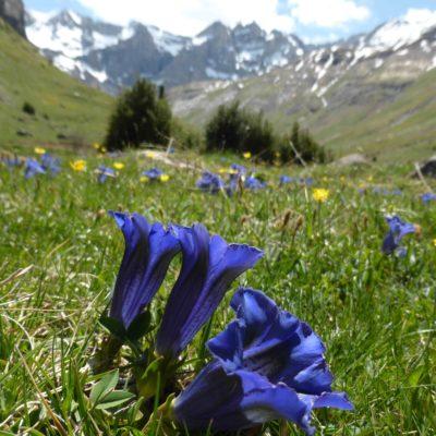 Paisage de montaña que nos encontraremos, rodeados de flores que a veces no les prestamos atención.