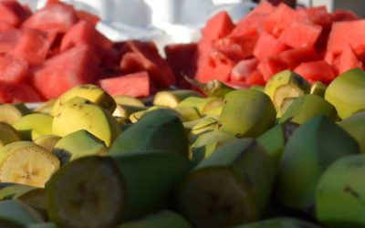 Nutrientes: lo que necesita mi cuerpo